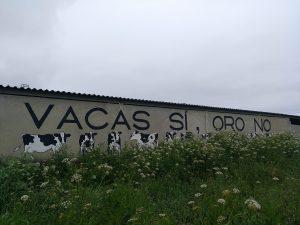 Vacas Si, Oro No