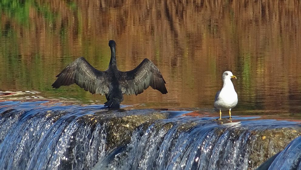 Refresco en el río Nalón