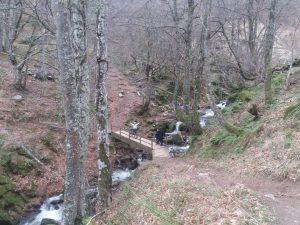 Hayedo Monte Grande